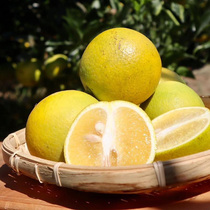 【濃橙柳丁】雲林斗六老欉柳丁(10台斤)+老欉雞蛋丁(10台斤)