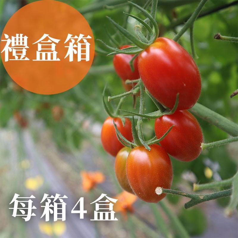 【熊蜂小番茄】雲林斗六玉女小番茄(禮盒箱)