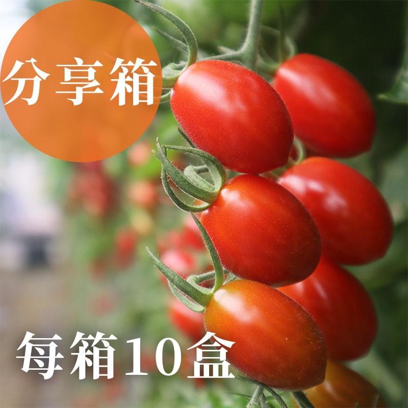 【熊蜂小番茄】雲林斗六玉女小番茄(分享箱)