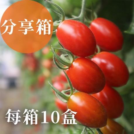 溫室栽培:歐洲熊蜂授粉,外型飽滿,皮薄餡豐