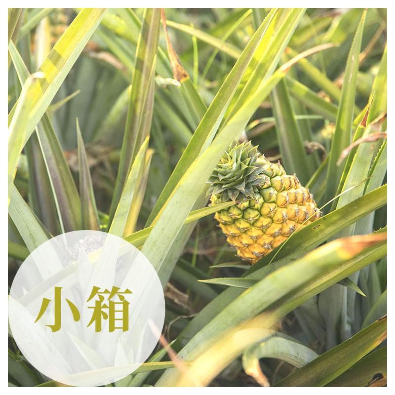 【鴻旗】台農17號-有機金鑽鳳梨(14台斤)