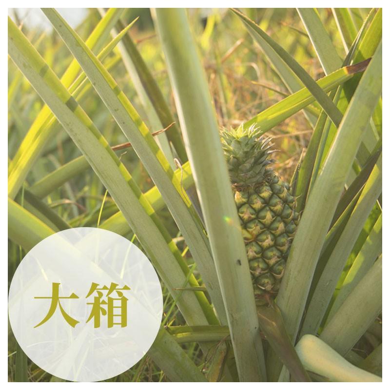 【鴻旗】台農17號-有機金鑽鳳梨(30台斤)