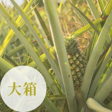 鴻旗有機休閒農場:台農17號-有機金鑽鳳梨