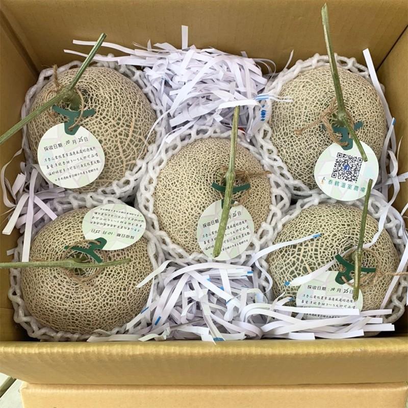 【豐圓哈密瓜】紅櫻網紋洋香瓜(5顆箱裝)
