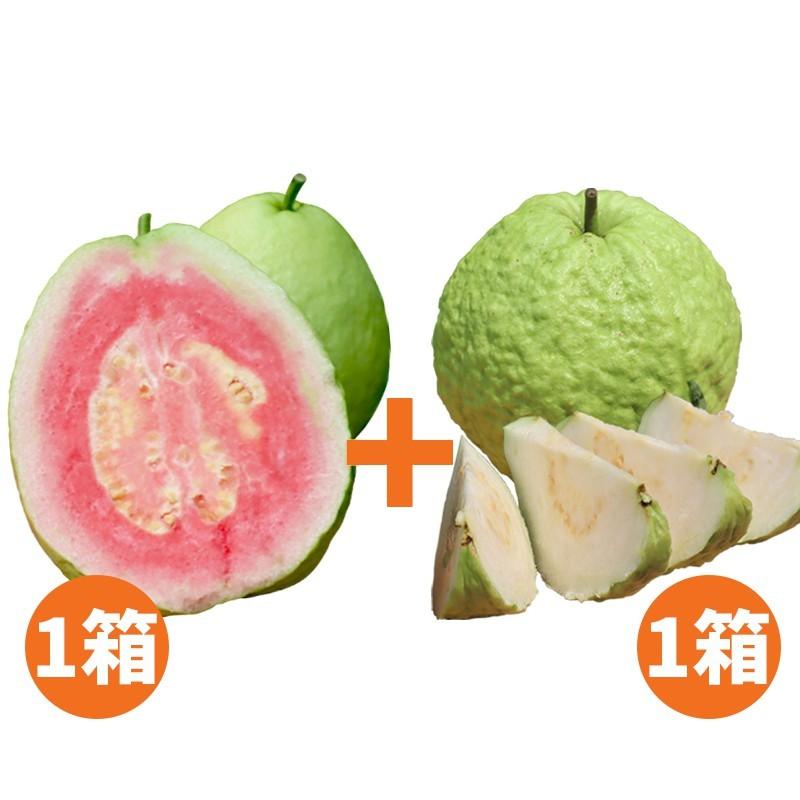 【水薄荷芭樂】紅心芭樂(5台斤)+帝王芭樂(5台斤)
