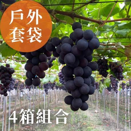 夏韻玉珠:戶外套袋的巨峰葡萄(3台斤裝)