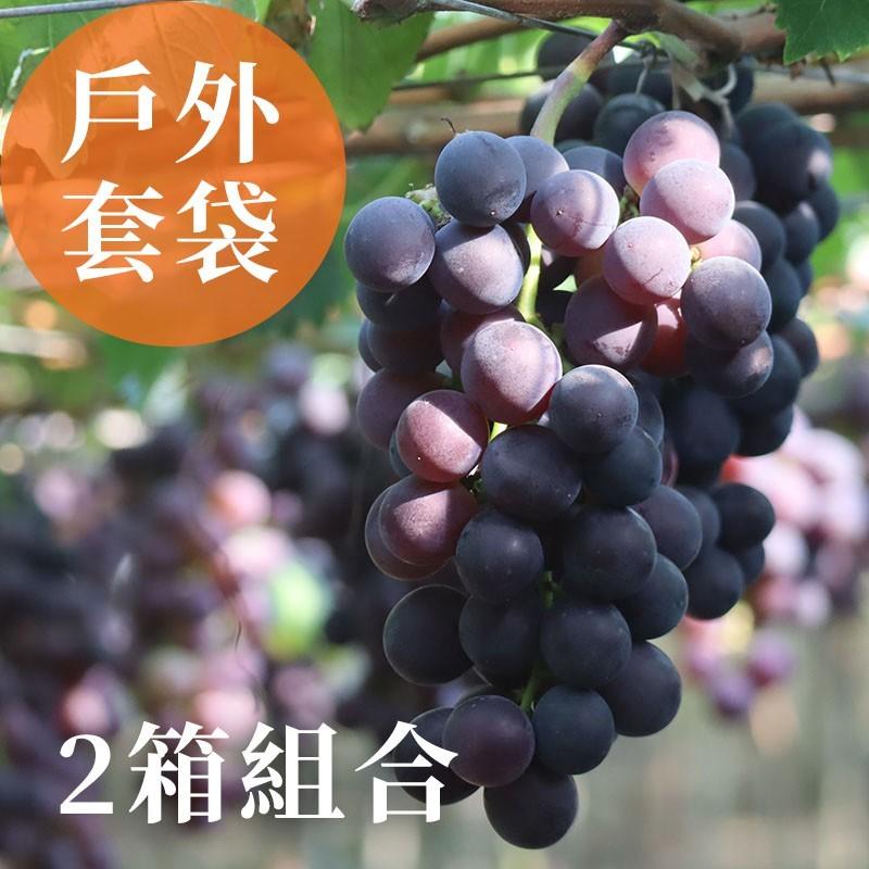 【夏韻玉珠】戶外套袋-巨峰葡萄(3台斤裝)-兩箱免運組