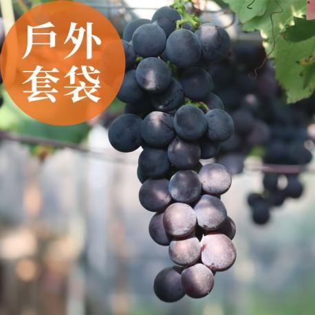 夏韻玉珠:戶外套袋的巨峰葡萄