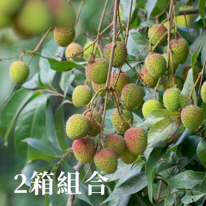 【夏荔香氣】高雄大樹玉荷包(5台斤裝)-兩箱免運組