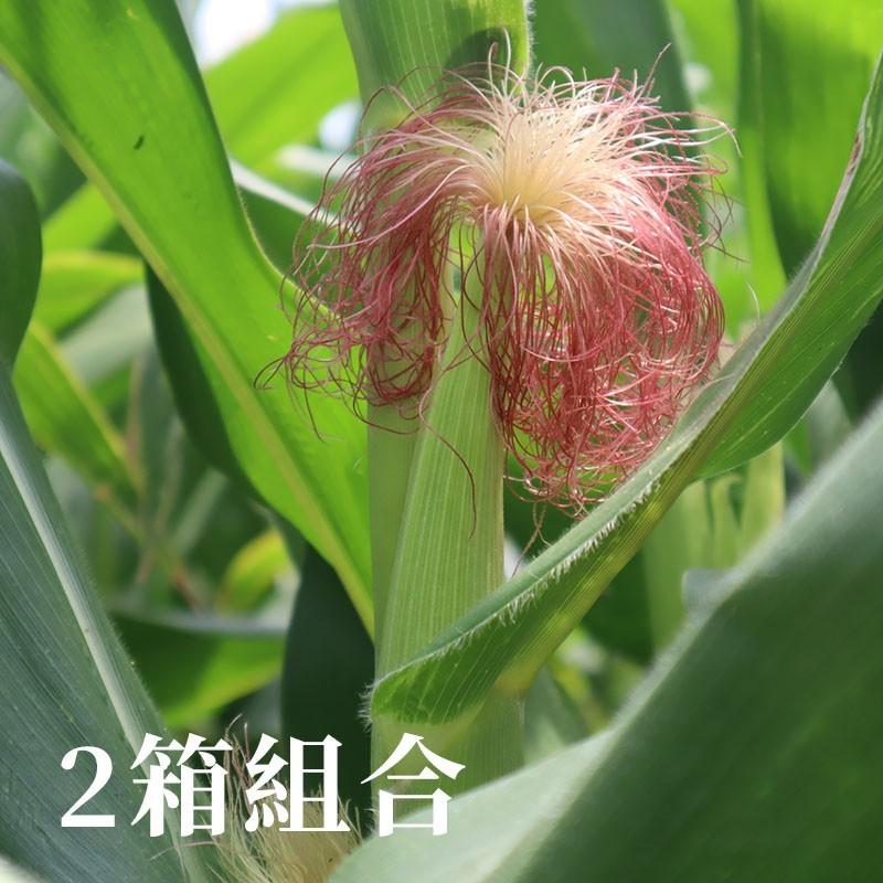 【七星生態】紅鬚玉米筍(6台斤裝)-兩箱優惠組