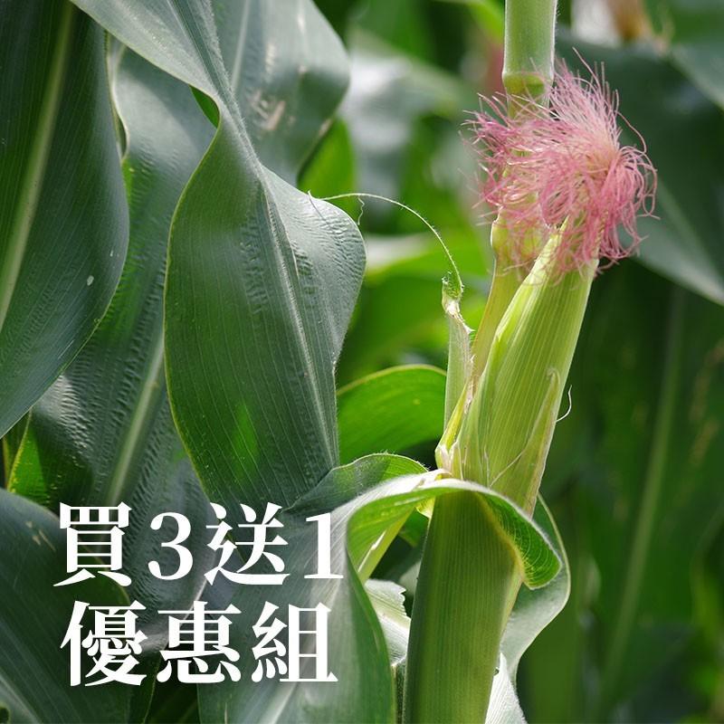 【七星生態】紅鬚玉米筍(6台斤裝)-買3送1優惠組
