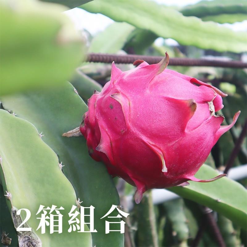 【大四喜火龍果】大紅-紅龍果(5台斤裝)-兩箱免運組