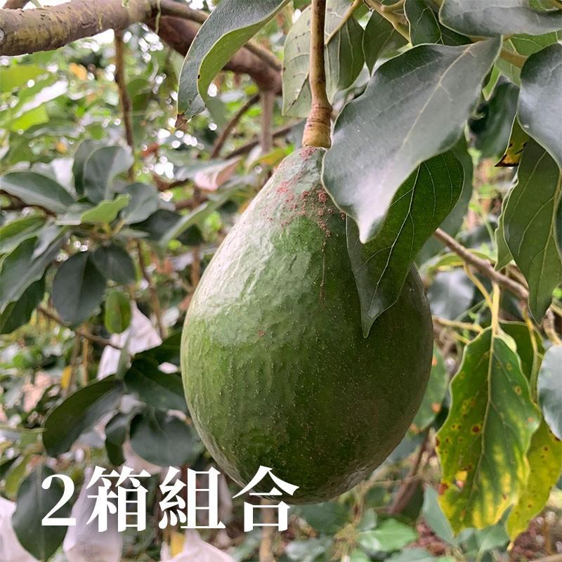【豐厚酪梨】屏東大武山酪梨(6台斤)-兩箱免運組