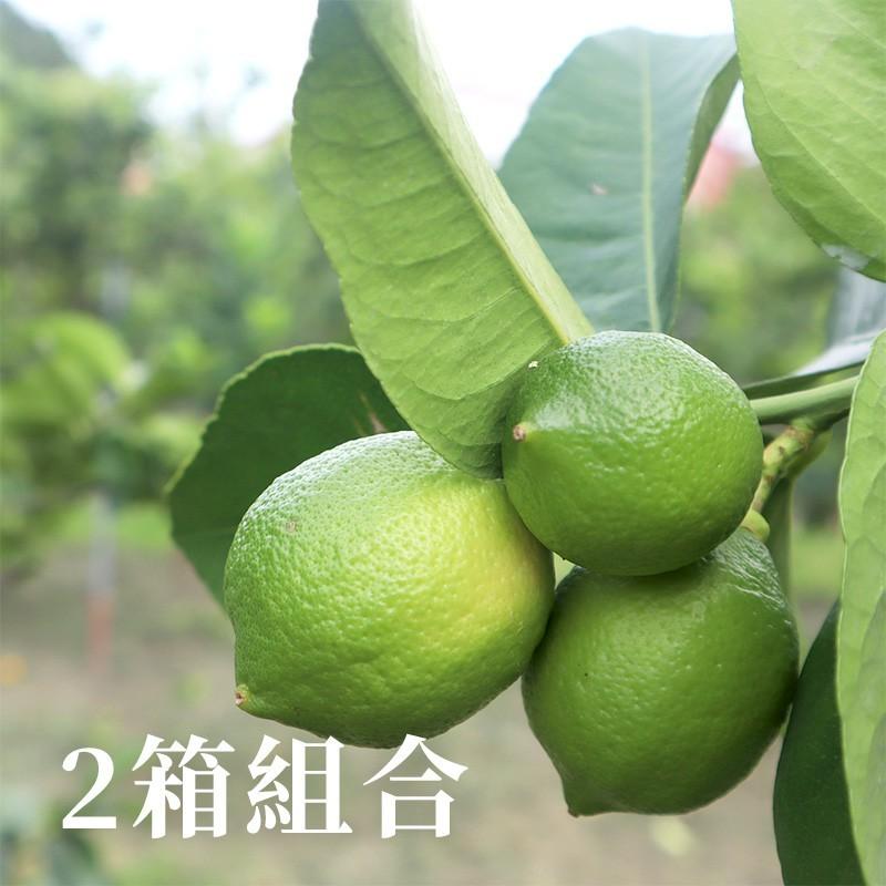 【誠檸檬】屏東高樹四季檸檬(5台斤)-兩箱免運組