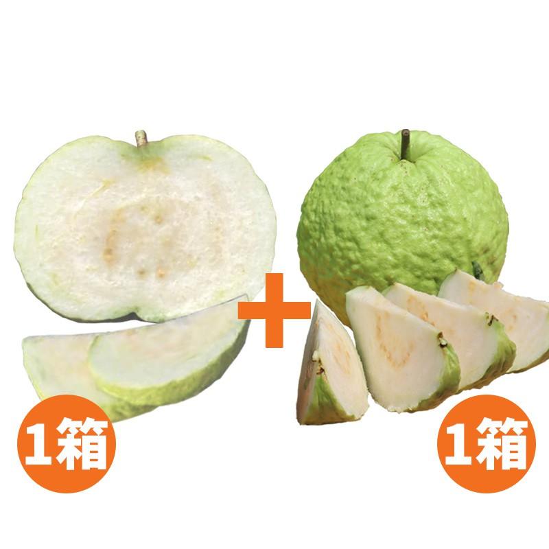 【水薄荷芭樂】水蜜芭樂(5台斤)+帝王芭樂(5台斤)
