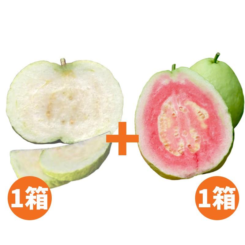 【水薄荷芭樂】水蜜芭樂(5台斤)+紅心芭樂(5台斤)