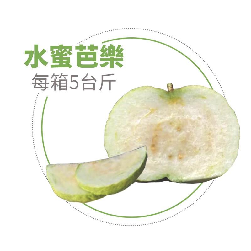 【水薄荷芭樂】水蜜芭樂(5台斤)