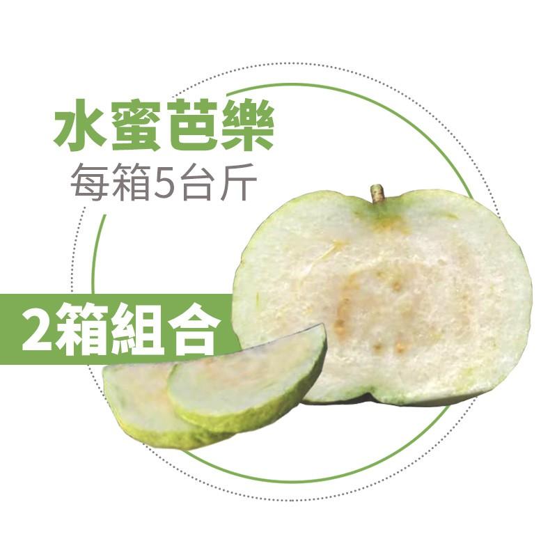 【水薄荷芭樂】水蜜芭樂(5台斤)-兩箱免運組