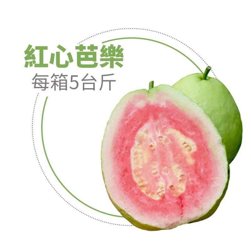 【水薄荷芭樂】紅心芭樂(5台斤)