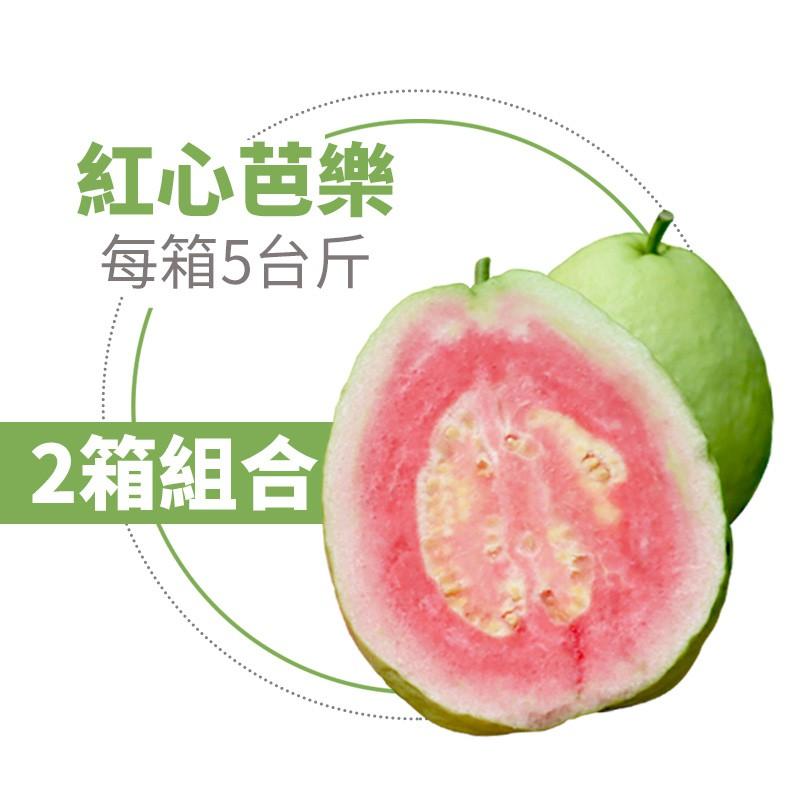 【水薄荷芭樂】紅心芭樂(5台斤)-兩箱免運組
