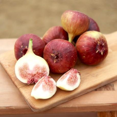 有機轉型期無花果:整顆果實都能安心吃!