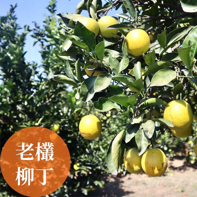 【濃橙柳丁】雲林斗六-老欉柳丁(10台斤)