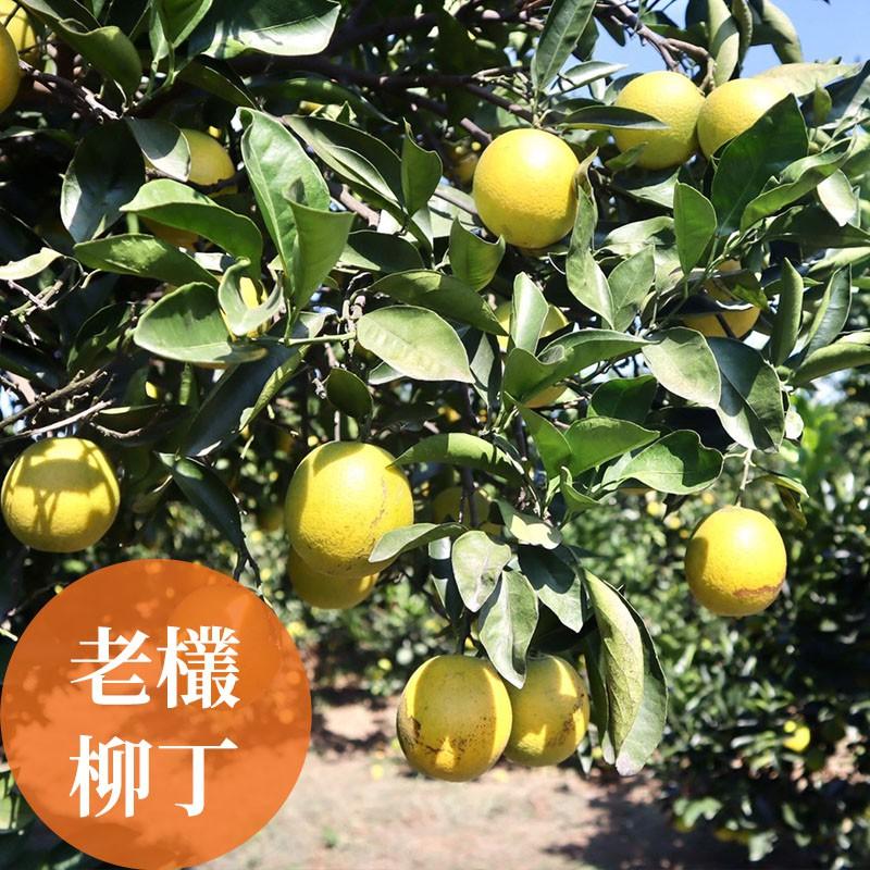 【濃橙柳丁】雲林斗六-老欉柳丁(30台斤)