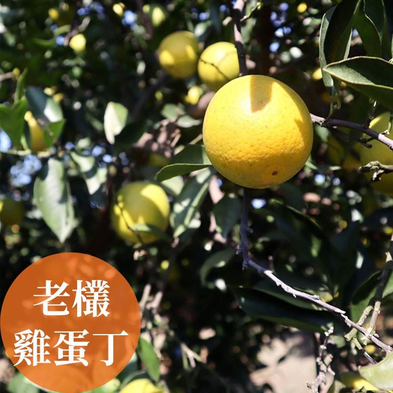 【濃橙柳丁】雲林斗六-老欉雞蛋丁(10台斤)