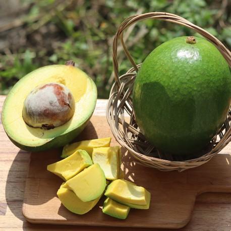 善循環:有機轉型期酪梨,台南大內產地新鮮直送!