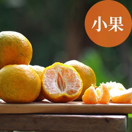 恬橘椪柑:40年的老欉椪柑(小果5台斤裝)