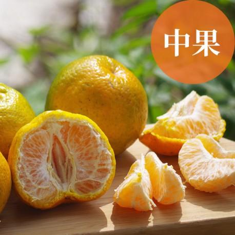 恬橘椪柑:40年的老欉椪柑(中果5台斤裝)