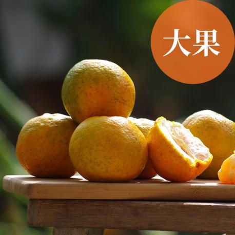 恬橘椪柑:40年的老欉椪柑(大果5台斤裝)
