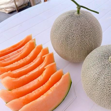 豐圓哈密瓜:愛櫻網紋洋香瓜(5顆箱裝)