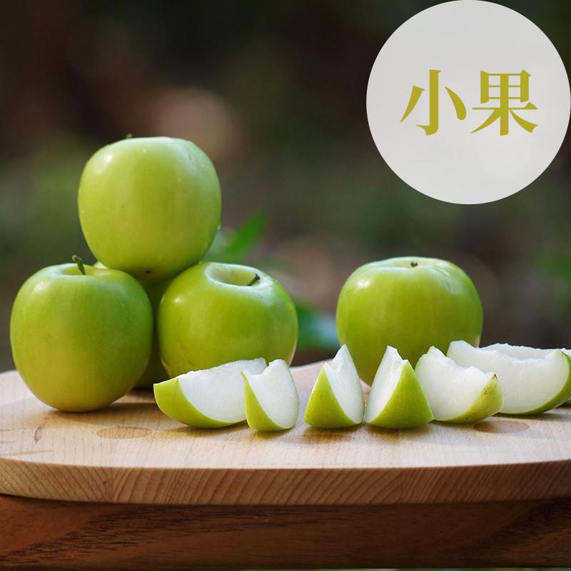 【棗初心】屏東高樹蜜棗(小果5台斤裝)