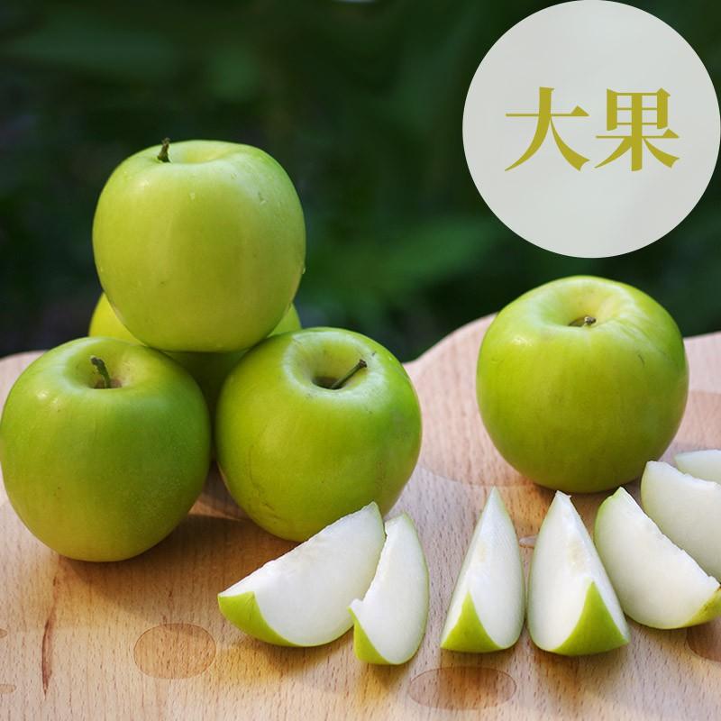 【棗初心】屏東高樹蜜棗(大果5台斤裝)