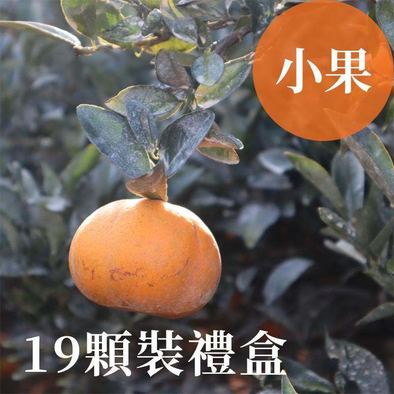 【吉利茂谷柑】雲林斗六茂谷柑(小果19顆禮盒裝)
