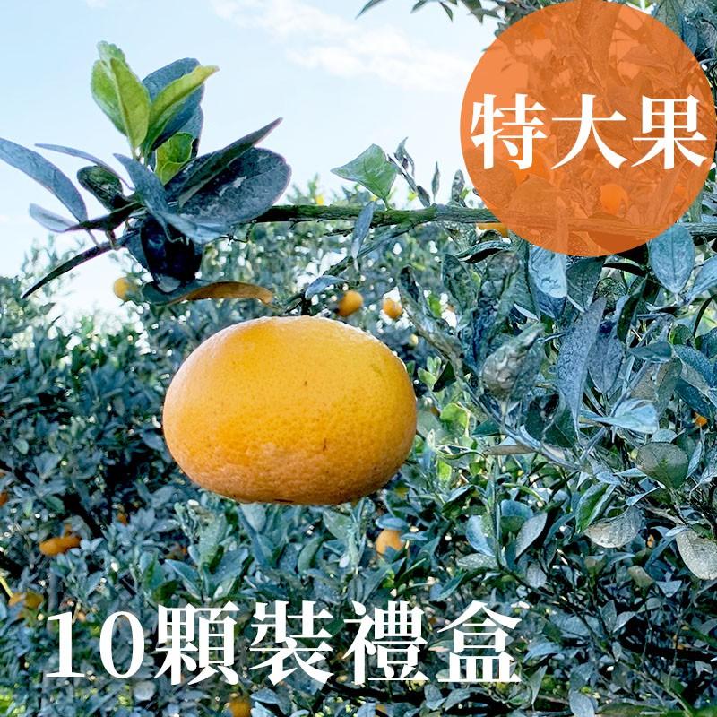 【吉利茂谷柑】雲林斗六茂谷柑(特大果10顆禮盒裝)