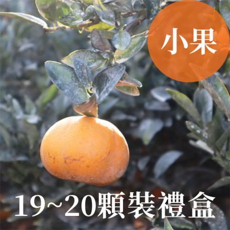 吉利茂谷柑:雲林斗六茂谷柑(小果19~20顆禮盒裝)