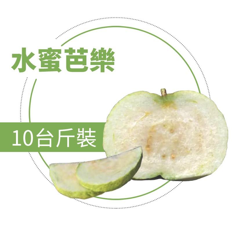 【水薄荷芭樂】水蜜芭樂(10台斤)