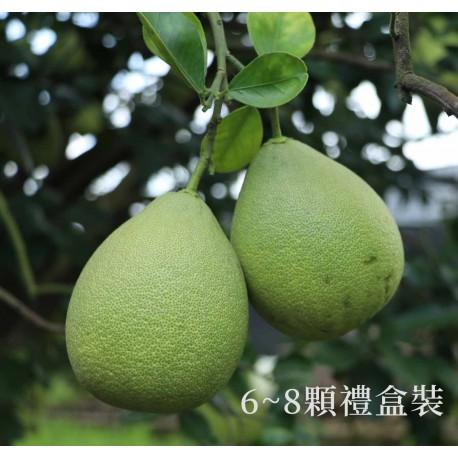 【台南麻豆】頂級老欉文旦禮盒(5斤)