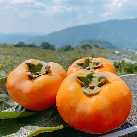 海拔900~1000公尺種植,淬鍊出果實高甜度