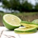 屏東高樹-無農藥四季檸檬