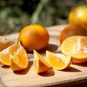 新竹寶山-安心弗利檬柑