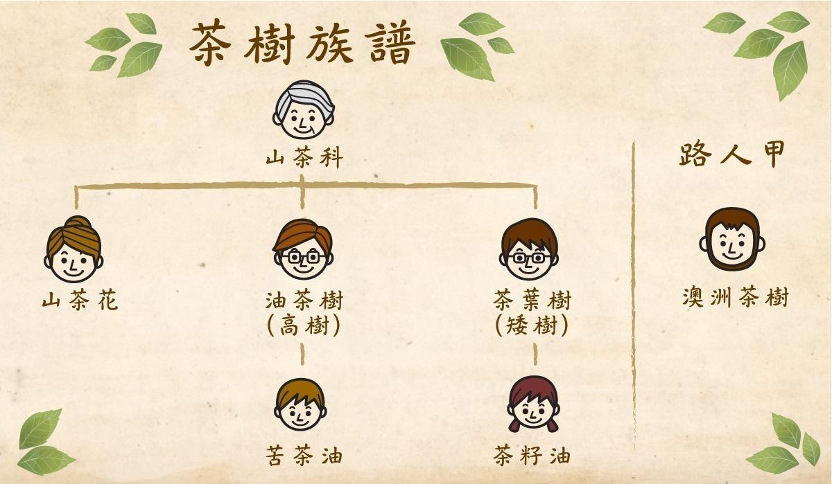 茶樹家族族譜