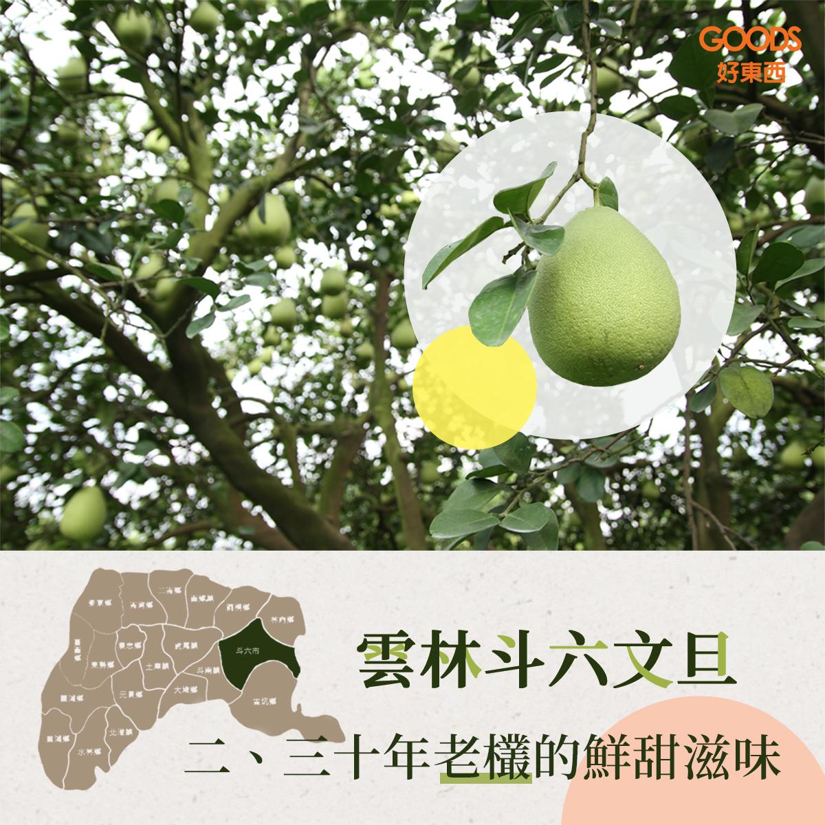 斗六文旦柚