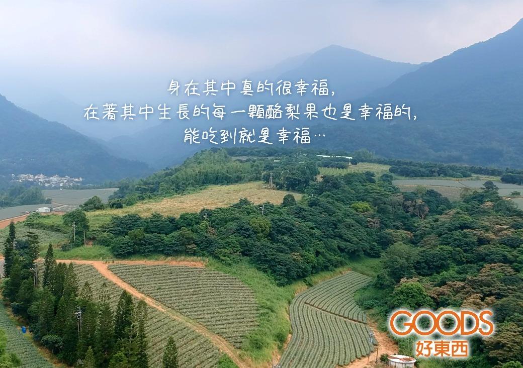 果樹被四季轉換推著走,而人又被酪梨果樹的變化推著走。