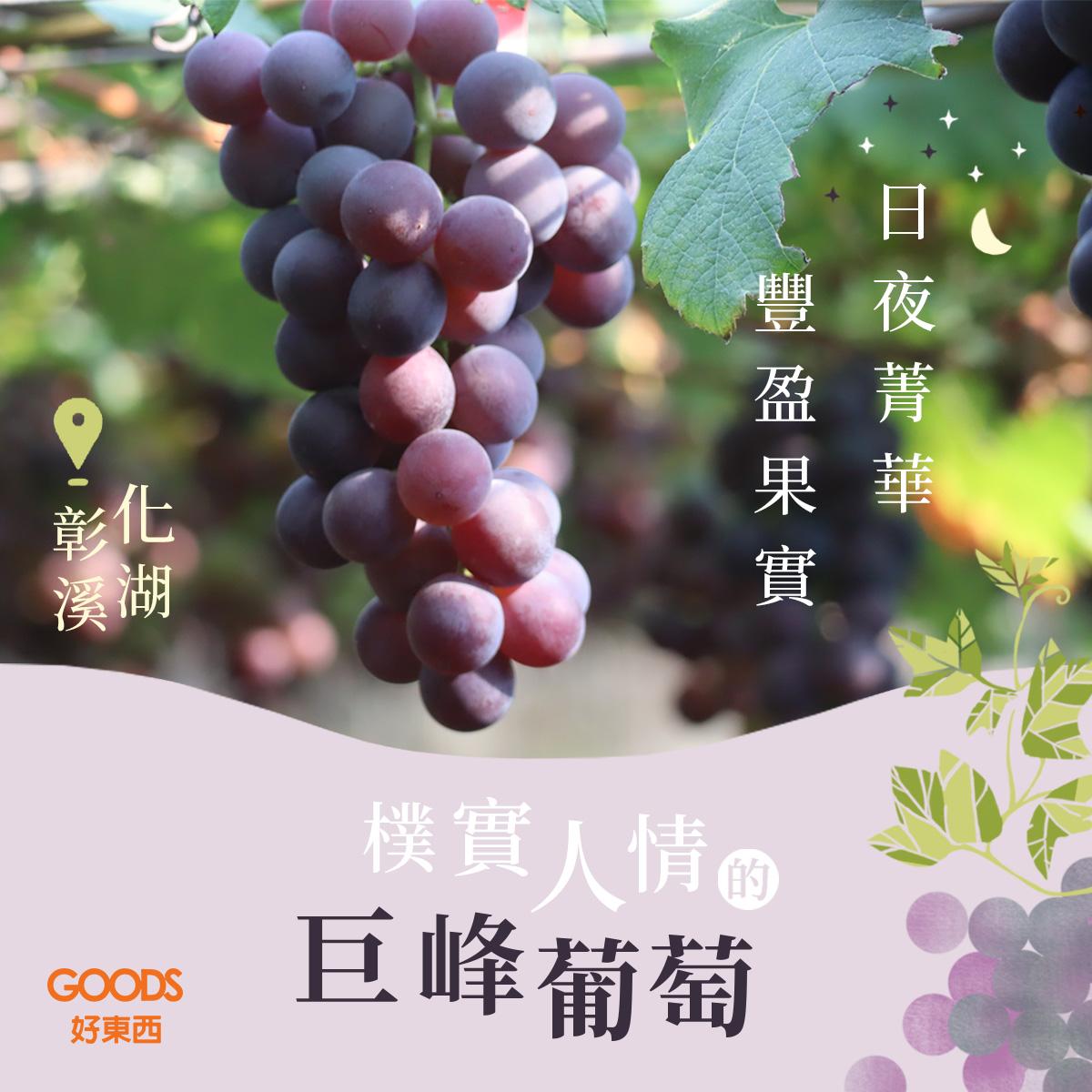夏韻玉珠巨峰葡萄