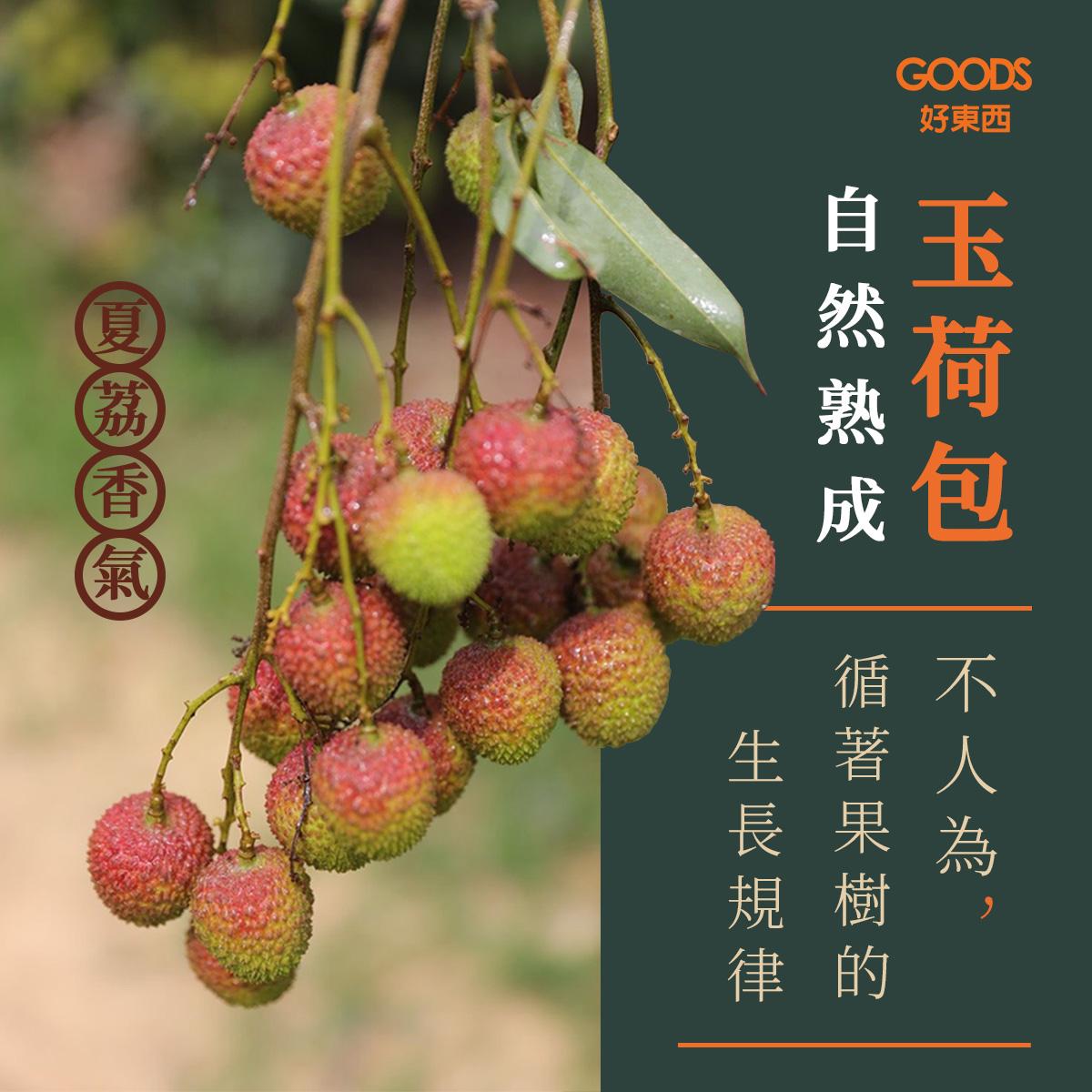 【夏荔香氣】循著果樹的生長規律-自然熟成的高雄大樹玉荷包