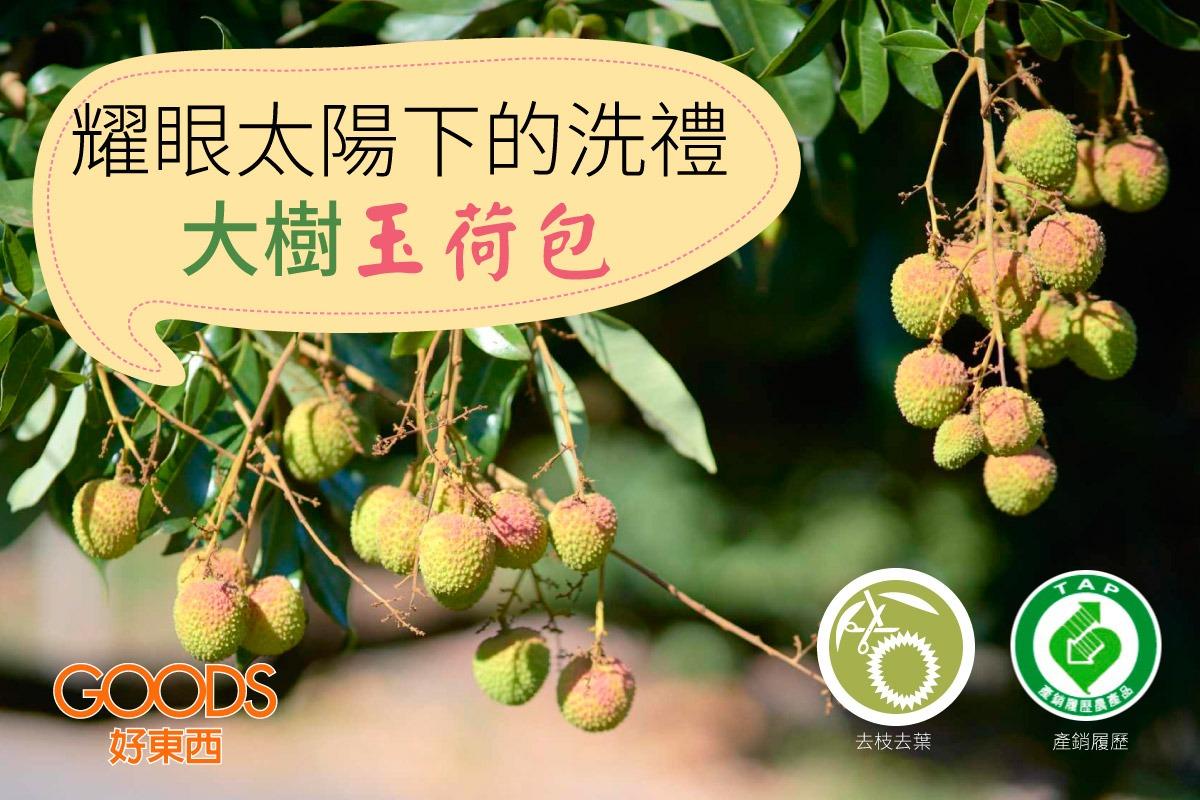 lychee01-高雄大樹玉荷包