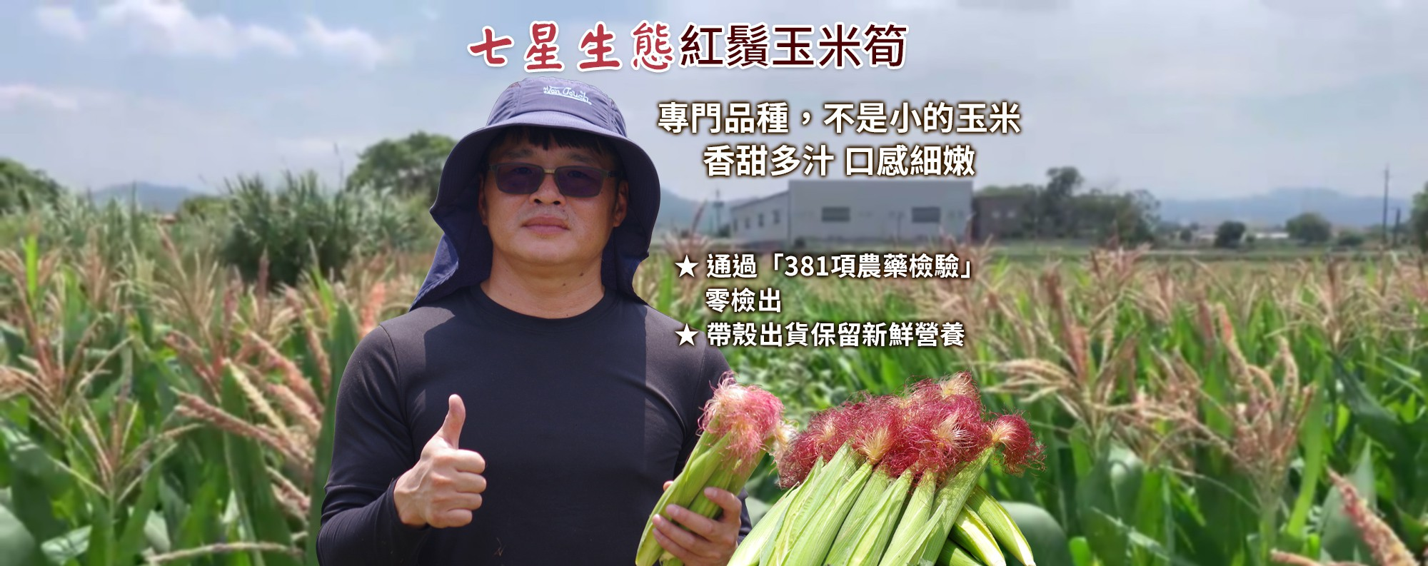 【七星生態】紅鬚玉米筍